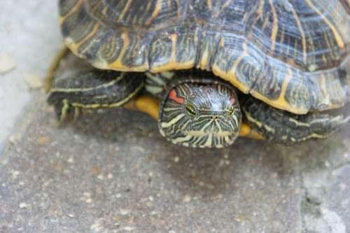 Turtle Animal Tortoise Green Reptile Shell