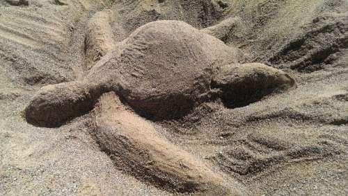 Turtle Sand Sand Sculptures Beach