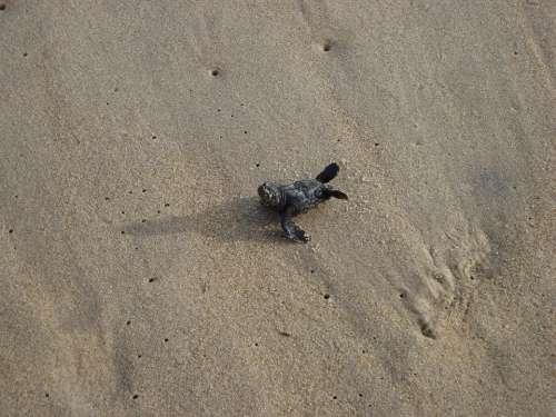 Turtle Baby Sand