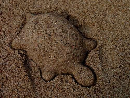 Turtle Sand Mold Sand Animal Play