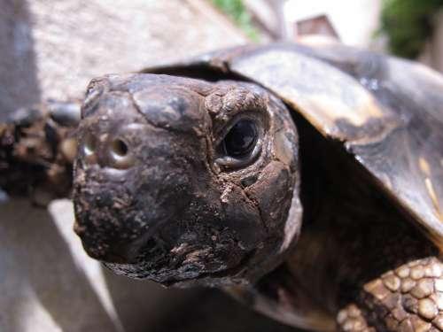 Turtle Animal Tortoise