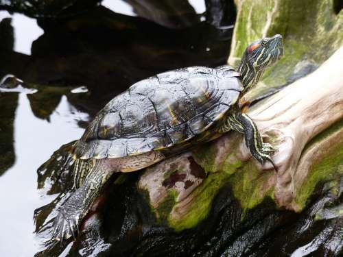Turtle Water Nature