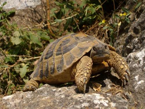 Turtle Rocks Nature Animal Reptile