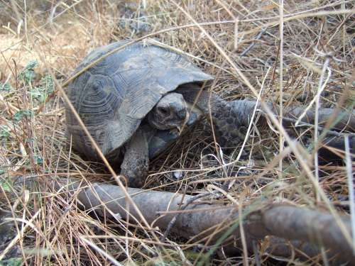Turtle Animals Slowly