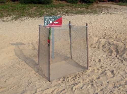 Turtle Nest Marking Guarded Sea Beach Arabian