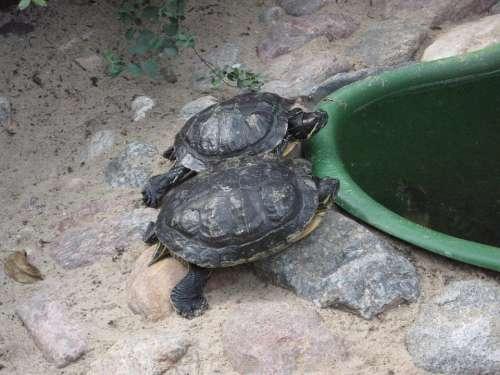 Turtles Reptiles Zoo