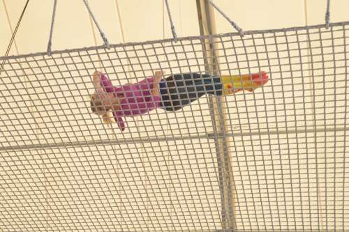 Twist Fall Diving Trapeze Free Fall Spin Circus