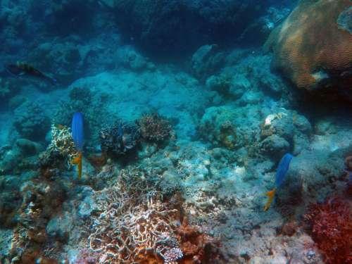 Under The Sea Deep Sea Fish Ocean Deep Aquatic