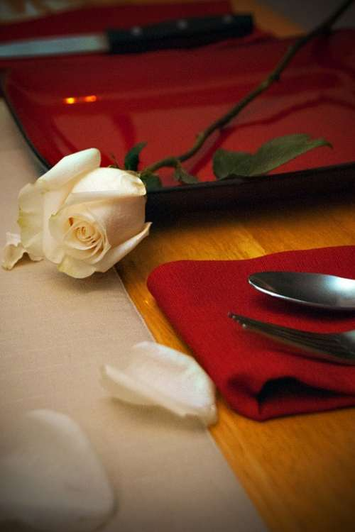 Valentines Rose Romance Romantic Flower Love