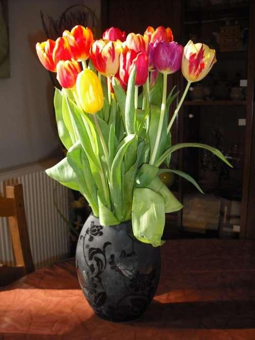 Vase Tulip Flower