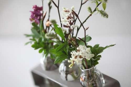 Vases Flowers Green White Houseplant Flower Vase