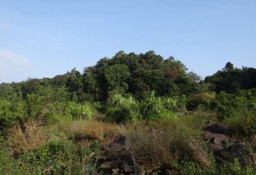 Vegetation River Bed Sharavati River Jog Falls