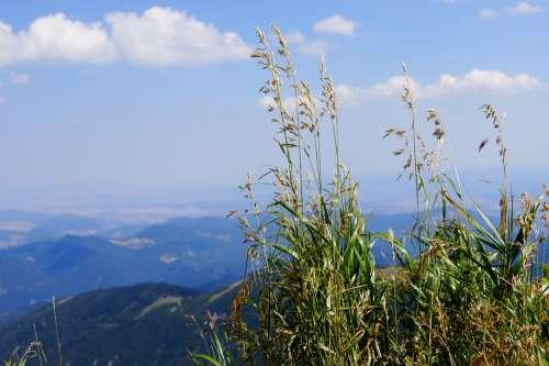 View Mountain Valley Alpine Sky