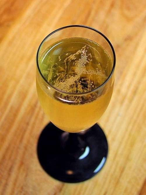 Vine Champagne Wine Drink Food