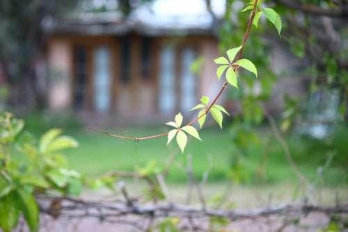 Vine Plant Leaf Green Leaves Garden Outbreak