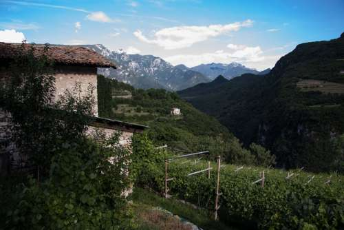 Vineyard Winegrowing Stone House Mountains