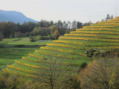 Vineyard Autumn Green