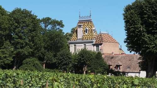 Vineyard Vine Vines Grapes Burgundy Castle Domain