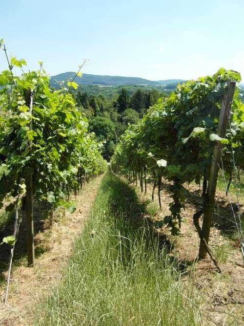 Vineyard Vines Wine Hill Odenwald Summer