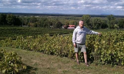 Vineyards Quebec Vineyard Romance Canada Person