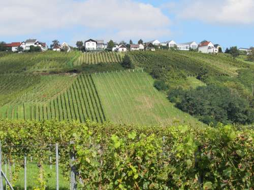 Vineyards Landscape Winegrowing Vineyard