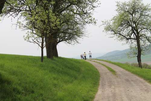 Wachau Landscape Trees Away Height Hiking Hike