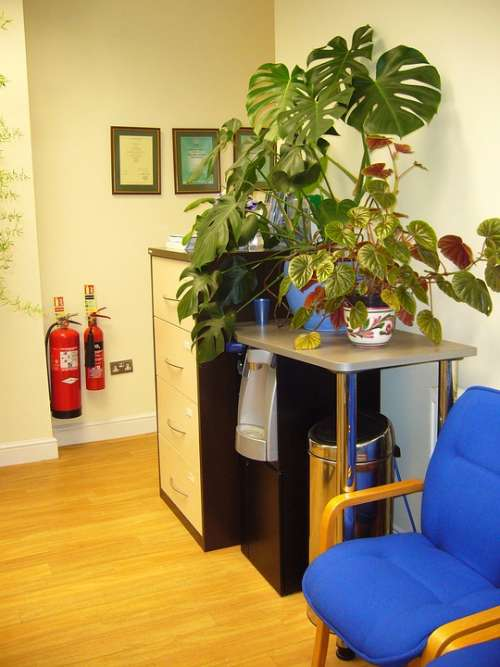 Waiting Area Chairs Indoor Plants Waiting Room