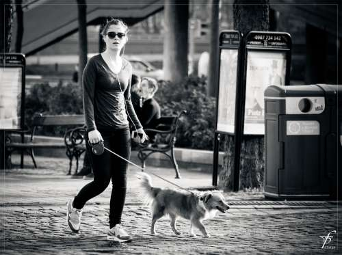 Walking The Dog Girl Woman Street Life Downtown