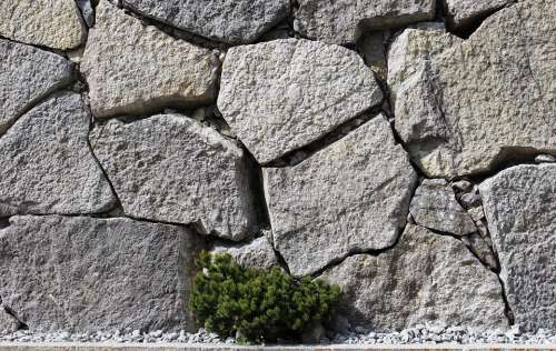 Wall Stones Fouling Plant Green