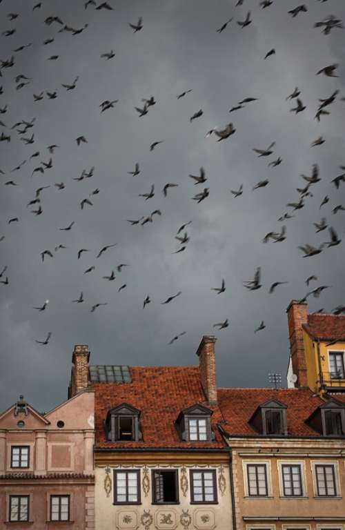 Warsaw Birds Mulet Weather Himmel House Roof