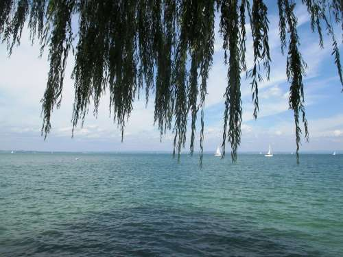 Water Lake Romanshorn Weeping Willow Pasture