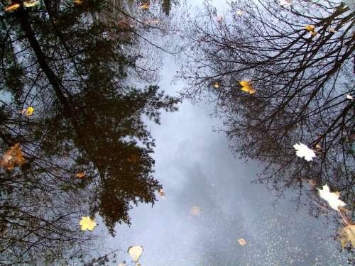 Water Sheet Nature Foliage Drops Trees Tree