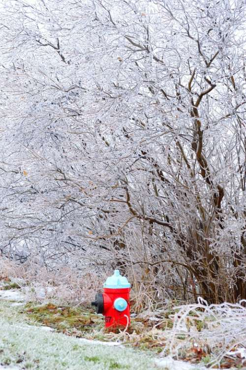 Water Hydrant Ice Branches Trees Winter Storm