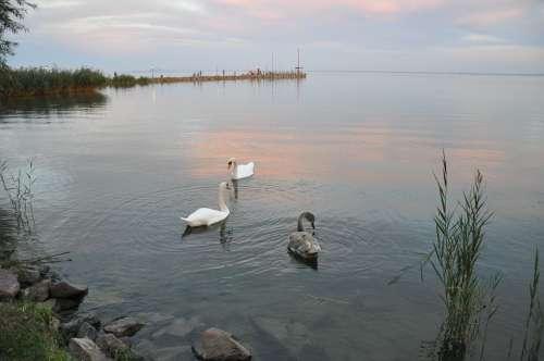 Water Level Lake Balaton Autumn