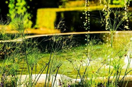Waterdrops Splashing Droplet Nature Grass