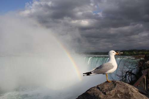 Waterfall Rainbow Seagull Niagara