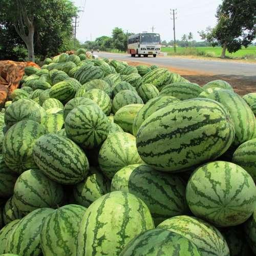 Watermelon Melon Citrullus Lanatus Red Fruit