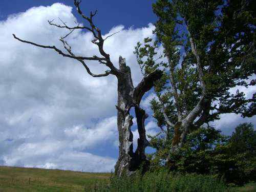 Weather Beech Hollow Tree Trunk Sky Blue Clouds