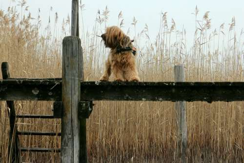 Web Boardwalk Reed Animal Dog Alone Wait Stand