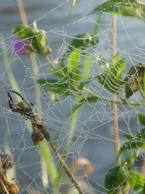 Web Lace Detail