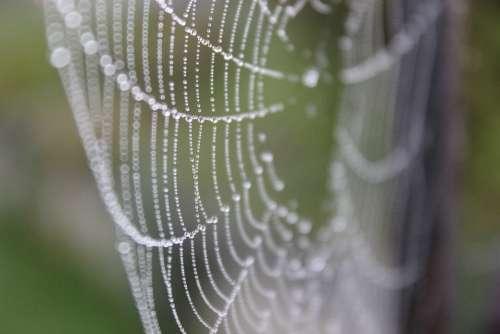 Web Dew Gossamer Drops Green Nature Dewdrop