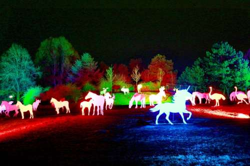 Westphalia Park Winter Lights 2013 Night Photograph
