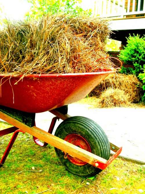 Wheelbarrow Outside Outdoor Equipment Pine Straw