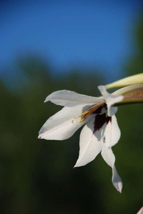 White Flower Nature Sunny Bloom Beautiful Macro
