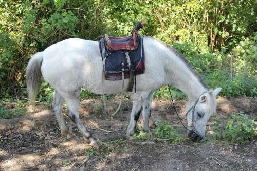 White Horse Animal White Object Horse Back Seat