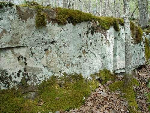 White River Arkansas Bluff Moss Wilderness Nature
