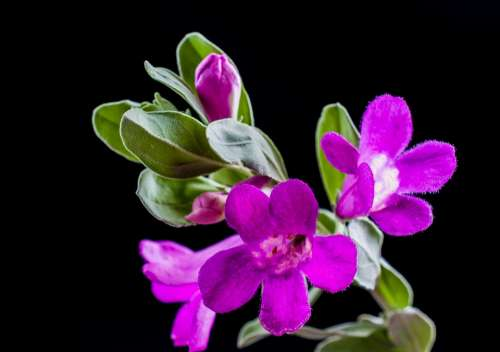 Wild Flower Flower Blossom Bloom Purple