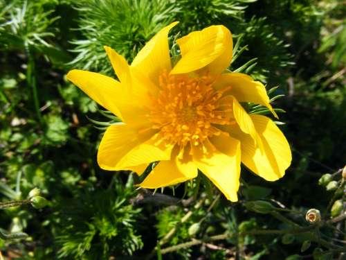 Wild Flowers Flower Yellow Flower Galbelna