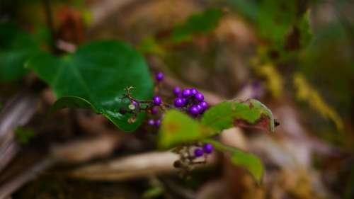 Wild Fruits Macro Purple