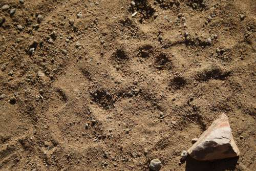 Wild Tracks Leopard Safari